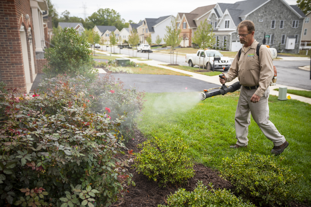 The 3 Best Ways to Get Rid of Mosquitoes in Your Yard