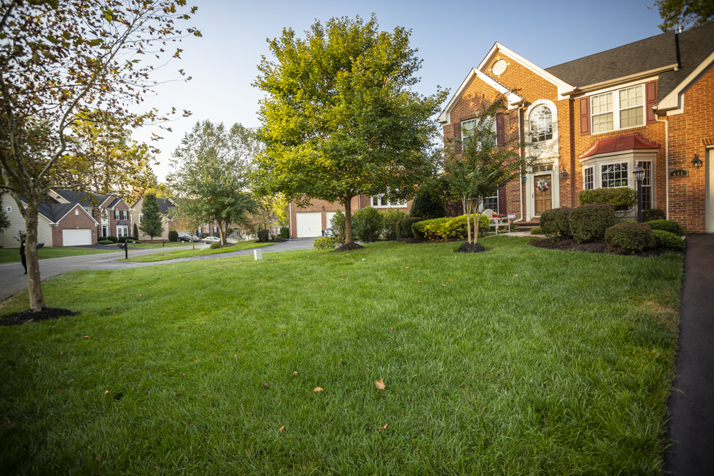 Healthy lawn cared for by Natural Green in Maryland
