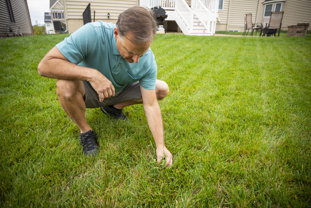 Customer with lawn issues wondering how to fix them